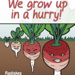 UF Extension Radish Festival poster 2 of 6