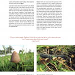 Page Design for Sacred Mushroom Rituals