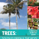 Trees: South Florida & the Keys